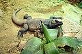 Artis Zoo (406544645).jpg