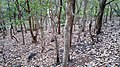 Asurankund Deep Forest - panoramio (5).jpg