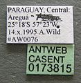 Atta sexdens casent0173815 label 1.jpg
