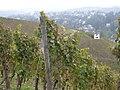 Auf dem Weinlehrpfad in Trier - Olewig - geo.hlipp.de - 14366.jpg
