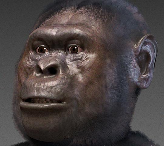 File:Australopithecus afarensis.png