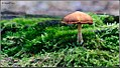 Autumn 2 (8148666209).jpg