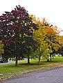 Autumn Colours, London N14 - geograph.org.uk - 996309.jpg