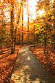 Autumn at Mason Neck (32772361020).jpg