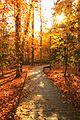 Autumn at Mason Neck (32772361020).jpg