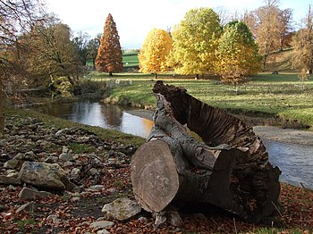 English: Autumn colours at Levens Park