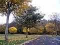 Autumn leaves - geograph.org.uk - 1045595.jpg