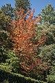 Autumn leaves are still falling-02 (26781843963).jpg