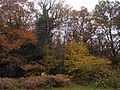 Autumn trees, Polecat, Shottermill 2.jpg