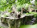 Bären im Zoo.JPG