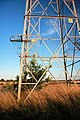 Baby oak tree inside electricity pylon - geograph.org.uk - 1421638.jpg