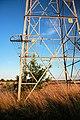 Baby oak tree inside electricity pylon - geograph.org.uk - 1421638.jpg