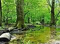 Bachlauf - Naturschutzgebiet Wahner Heide, Porzer Weg - Kurtenwaldbach; Deutschland, NRW.jpg