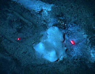 Cold seep - Bacterial mat consisting of sulfide-oxidizing bacteria Beggiatoa spp. at a seep on Blake Ridge, off South Carolina. The red dots are range-finding laser beams.