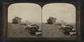 Bags of wheat and piles of straw from a steam harvester, California, U.S.A, from Robert N. Dennis collection of stereoscopic views.png