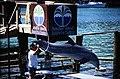 Bahamas 1988 (298) Paradise Island Paradise Lake (23876199130).jpg