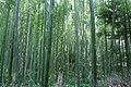 Bamboo (44011308).jpeg