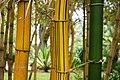 Bambus (14400532775).jpg