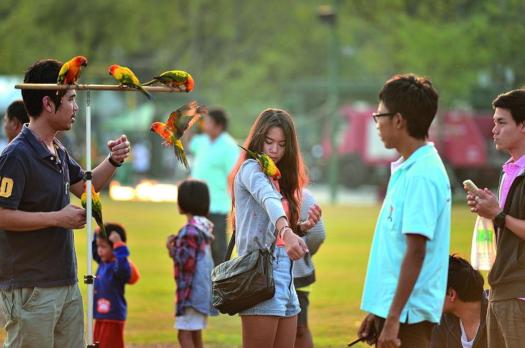 Perruches et passant dans le parc de Sanam Luang - Photo de Mr.Peerapong Prasutr