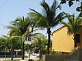 Barranquillas palos de coco.jpg
