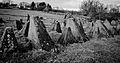 Bastogne Historic Walk 2011 (6545675265).jpg