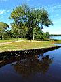 Batsto Lake.jpg