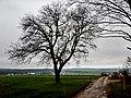 Baum bei Wiernsheim - panoramio.jpg