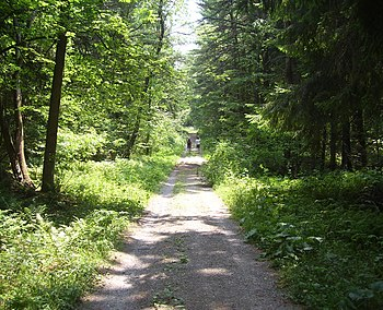 Bear Swamp State Forest.jpg