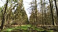 Beetsterzwaag forrest in April - panoramio (8).jpg