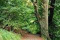 Belvoir forest, Belfast (1) - geograph.org.uk - 1515048.jpg