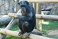 Beto Carrero Zoo - panoramio (7).jpg