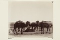 Bild ur Johanna Kempes samling från resan till Algeriet och Tunisien, 1889-1890 - Hallwylska museet - 91799.tif