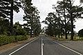 Bilpin NSW 2758, Australia - panoramio (13).jpg