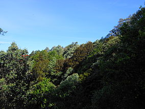 Binsar Oak Forests.JPG