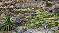 Biosphere Reserve La Gomera 28.jpg