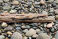 Birch Bay State Park (2015-05-16) — Driftwood.jpg
