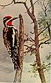 Bird neighbors (1903) (20195643870).jpg