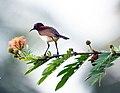 Birding - 6198288665.jpg