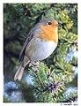 Birds in the garden (15951433388).jpg