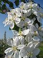 Blüten.jpg