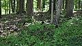 Black Squirrel on ground near visitor center. (58e88393-2b03-427f-92fc-e270b9c10d81).JPG