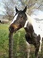Black and White Horse, Junction, UT.jpg