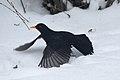 Blackbird Lodz(Poland)(js)05.jpg