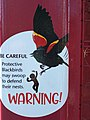 Blackbird warning sign Vancouver.jpg