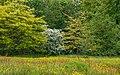Bloemenweide aan rand van boomwal. Locatie, Natuurterrein De Famberhorst 02.jpg