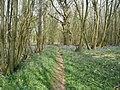 Bluebells in Beech Woods - geograph.org.uk - 1264244.jpg
