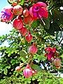 Blumenampel - panoramio.jpg