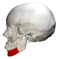 Body of mandible - skull - lateral view.png
