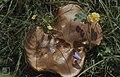 Boletus, Squinancy wort, Hairbell, Salad burnet, Tormentil, Rock rose, Castle Down, 11 8 1978 (22843545248).jpg