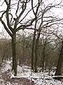 Boreč (České středohoří), stromy.jpg